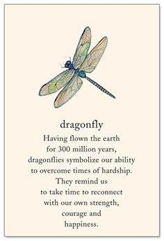 Dragonfly Support & Encouragement Card - Gardening For Life Dragonfly Quotes, Dragonfly Art, Dragonfly Symbolism, Dragonfly Meaning Spiritual, Dragonfly Images, Small Dragonfly Tattoo, Butterfly Tattoo Meaning, Spiritual Meaning, Dragonfly Painting
