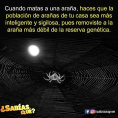 Sígueme para ver más curiosidades.  @sabiasqvm  @datocuriosovm @mundo_curiosidad @tiojavierplay @curiososiempre  #sabiasque#curiosidades#datocurioso #conocimiento#dato #interesante #salud #saludable #españa #mexico #argentina Scary Facts, Wtf Fun Facts, True Facts, Good To Know, Did You Know, Creepy History, Curious Facts, Love Store, Teaching Quotes
