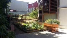 Jardin partagé Maison des Solidarités Arcueil