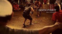combat de coqs, gagner ou être poulet frit goo.gl/r0WW8r #voyage #culture #indonesie