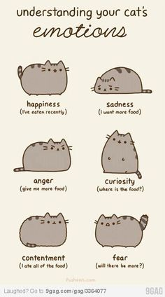 "Ignore the Reasons Why Pusheen The Cat Would Make The Perfect Boyfriend"". Pusheen is a girl. Funny Cats, Funny Animals, Cute Animals, Dumb Cats, Funny Horses, Fat Cats, Cats And Kittens, Fat Kitty, Kitty Cats"