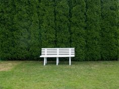 thuja-bench  Thuja Green Giants