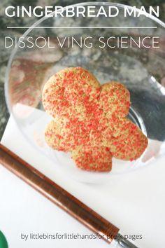 Dissolving Gingerbread Man Science Activity for Preschool and Kindergarten
