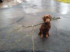 I got you the biggest stick I could find because I looove you!