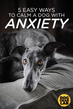 Useful Dog Obedience Training Tips – Dog Training Dog Separation Anxiety, Dog Anxiety, Anxiety Tips, Dog Training Classes, Dog Training Tips, Crate Training, Durable Dog Toys, Dame Nature, Dog Health Tips