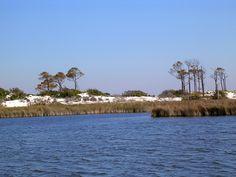 Pond on Horn Island MS