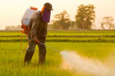 Agent Orange #Herbicide 2,4-D Linked to #Cancer Risk in Humans http://www.organicauthority.com/agent-orange-herbicide-24-d-linked-to-cancer-risk-in-humans-says-world-health-organization/