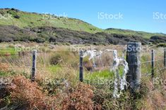 Rural Fencing and Landscape, New Zealand royalty-free stock photo New Zealand Landscape, Fencing, Image Now, Agriculture, Royalty Free Stock Photos, World, Travel, Outdoor, Outdoors