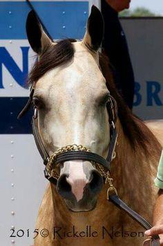 Smokey the Pony