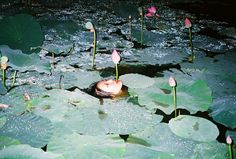 A nude woman floats in a pond full of water lilies. Ren Hang on nature, nudity and censorship: http://www.dazeddigital.com/photography/article/24031/1/ren-hang-on-nature-nudity-and-politics