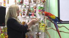 Part 1 - Syringe Training Scarlet Macaw with Barbara Heidenreich at Rodi...