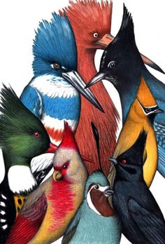 Punked - 8x10 Bird Print - Made in USA Art | Hunters & Gatherers Brevard NC