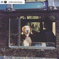 Thanks for posting this @_defenderdogs_  #Repost with @repostapp.  #defender #defender90 #defender110 #defenderitalia #heritage #defender_life_style #defender_for_ever #offroad #4x4 #landrover #landlovers #landroveritalia #searchandrescue #landroverdefender #picoftheday #defenderlove #td5 #td4 #ilovelandrover #leggenda #offroaditalia #offroadlife #extreme #dogs #puppy #beagle #lagotto #dogstagram #puppylove @projectoverlandy by projectoverlandy Thanks for posting this @_defenderdogs…