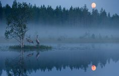 Cranes at night in Finland. By Jouni Mäkipelto Beautiful World, Beautiful Places, Garden Animals, Dark Skies, Lake View, Nature Pictures, Natural Wonders, What Is Like, Amazing Nature