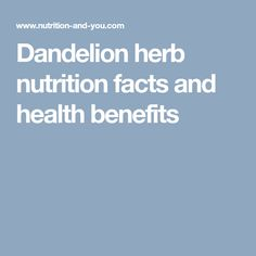 Dandelion herb nutrition facts and health benefits