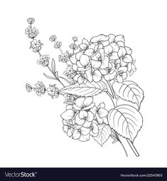 Floral design of lavender and hydrangea isolated over white background. Spring bouquet of flowers in line sketch style. Cute Flower Drawing, Flower Line Drawings, Floral Drawing, Flower Art, Bouquet Of Flowers Drawing, Flower Sketches, Tattoo Drawings, Body Art Tattoos, Art Drawings