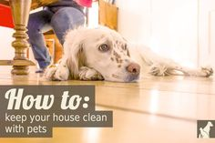 A valuable resource for pet-owning clean freaks. It is possible to be both!: Tips on keeping your house clean with dogs and cats