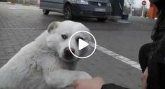 Desconhecidos Aproximam-Se De Um Cão De Rua, o Que Ele Faz é Realmente Adorável