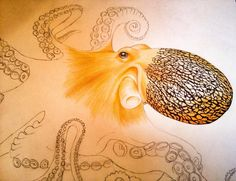 Progress Pic 1 Of My Octopus In Colored Pencil And Ink See All The Work
