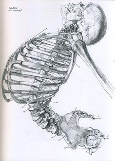 Desenhos de apoio [visualização do esqueleto]
