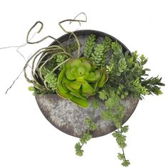 2193 best plantes grasses images on pinterest in 2018 cacti and succulents vegetable garden. Black Bedroom Furniture Sets. Home Design Ideas