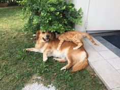 Birbo e Rudi