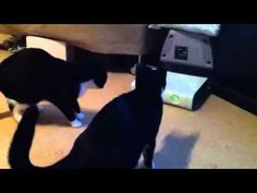 These two cats in this video are very curious about that thing on the Xbox called a Disk Drive - looks like a cat toy to them!