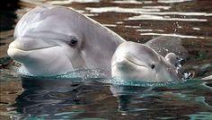 So Sweet...baby dophin!