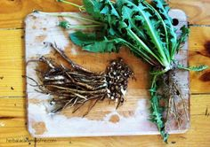 Three Medicinal Roots to Harvest in the Fall    plus, ethical harvesting tips    by Herbal Academy of New England