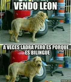 Discovered by sabrina riggs. Find images and videos about memes and memes en español on We Heart It - the app to get lost in what you love. Animal Jokes, Funny Animal Memes, Cute Funny Animals, Funny Dogs, Funny Memes, Hilarious, Spanish Jokes, Funny Spanish Memes, Mexican Memes