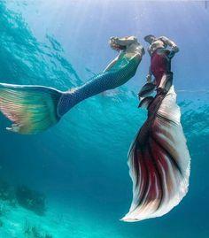 I'm loving that longer tail fin! Mermaid Board, Mermaid Man, Siren Mermaid, Mermaid Cove, Tattoo Mermaid, Real Mermaids, Mermaids And Mermen, Fantasy Mermaids, Realistic Mermaid Tails