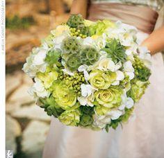 green and white hydrangeas