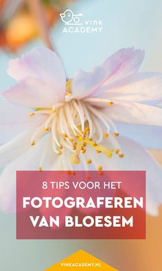 Fotografie tips voor beginners: hoe fotografeer je de bloesem aan de bomen het mooist? Tips hoe je de bloesem fotografeert met bijvoorbeeld een macrolens, maar ook waar je nog meer op moet letten, zoals de achtergrond, scherptediepte en camera-instellingen! #macrofotografie