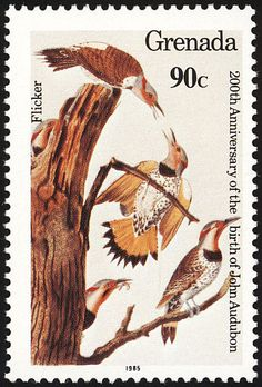 Northern Flicker stamps - mainly images - gallery format
