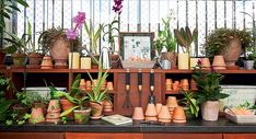 Neste terceiro vídeo da websérie Cinco em 1, aprenda a cuidar das suas orquídeas. Confira abaixo: