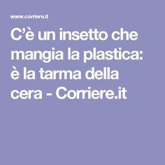 C'è un insetto che mangia  la plastica: è la tarma della cera - Corriere.it