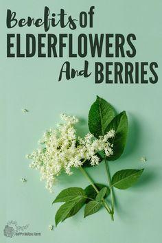 Benefits of elderflower and elderberry. Elderberry Flower, Elderberry Plant, Elderberry Syrup, Natural Flu Remedies, Cold Remedies, Herbal Remedies, Health Remedies, Elderberry Benefits, Elderberry Recipes