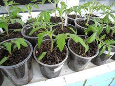 Summer House Garden, Lawn And Garden, Home And Garden, Herb Garden Design, Small Farm, Garden Trees, Farm Gardens, Recipe Of The Day, Hydroponics