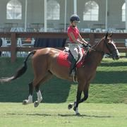 The Best Abdominal Exercises for Horse Riders   LIVESTRONG.COM