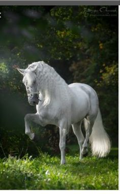 One more beautiful horse