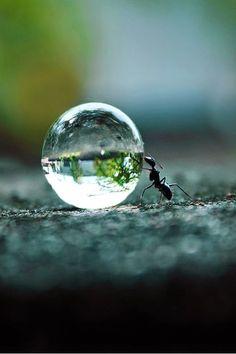 Gota de agua - hormiga