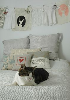 bedroom_cat
