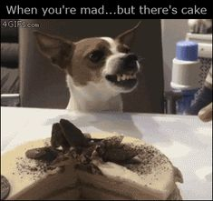 Oh! There's cake! It's ok everything is fine!#dogs #kitty #lovecats #kittens #animals #ねこ #animal #kitten #cat #pets #ilovemycat #love #catoftheday #happynewyear #adorable #catlover #pet #meow #猫 #cute #pinterest