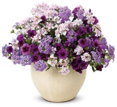 Sweet Serenity | Proven Winners-to make this planter use 1 Superbells Plum calibrachoa hybrid, 1 Superbena Large Lilac Blue verbena hybrid and 1 Opal Innocence nemesia fruticans