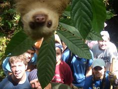 Baby sloths. Always have to be in the spotlight...