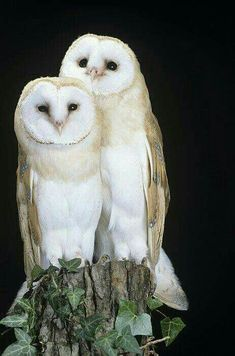 Beautiful Couple...