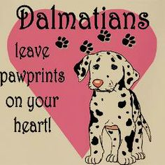 dalmatians cooking | Dalmatian Pawprint Aprons | Dalmatian Pawprint Cooking Aprons for Men ..