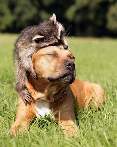 Here's a list of some of the cutest unlikely bonds between animal friends... 1.2.  3. 4. 5. 6. 7. 8. 9. 10. 11. 12. 13. 14. 15. 16. 17. 18. 19. 20. 2