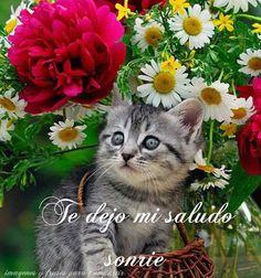 Lindos gatitos con frases lindas de Buenos dias en imágenes