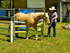 25 Best Horse Obstacles Images In 2018 Horses Horse